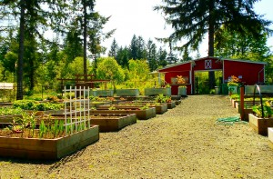 Work Party @ Yauger Park | Olympia | Washington | United States