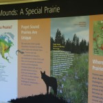 Mima Mounds Olympia Washington (10)