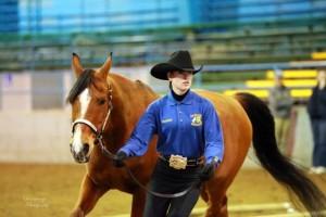 rochester equestrian