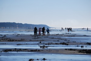 Razor Clam Dig @ Twin Harbors, Long Beach