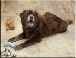 Adopt-A-Pet's dog of the week is this cuddly sweetheart named Bear.