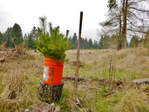 Tree Salvage @ Nisqually Land Trust and CNLM
