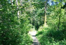 Olympia Trails