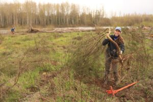 Earth Day Scotch Broom Pull @ Nisqually Land Trust