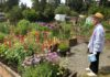 Panorama Pea Patch C&R Flower Garden