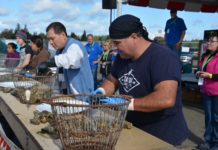 OysterFest Shelton shucking competition