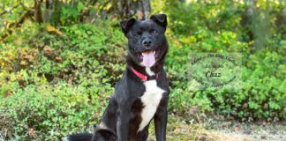 Adopt A Pet Dog of the Week October Chas