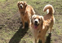Thurston County Dog Parks