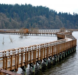 At high tide, the Estuary trail is completely over the water for easy waterfowl viewing.