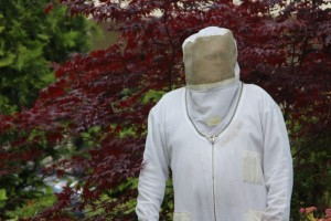 olympia bee removal