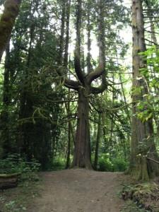Thrifty Thurston Walks Nature Trails - Kid, Dog Friendly Hikes