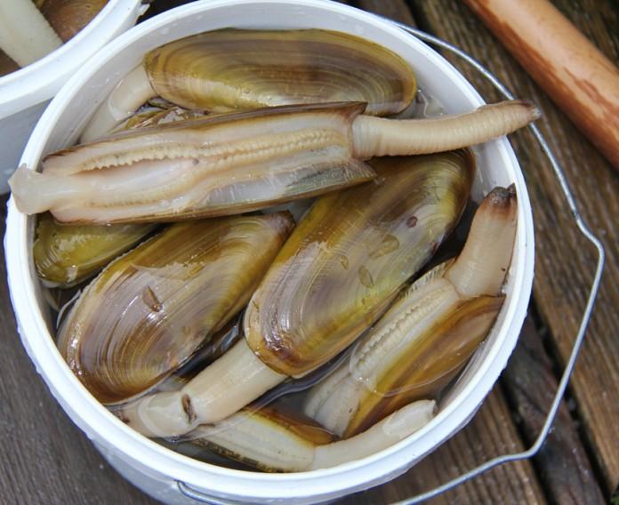 Razor clam dig