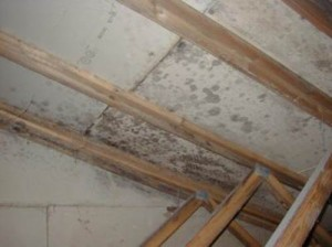 Mold and Mildew growing on the underside of a roof.