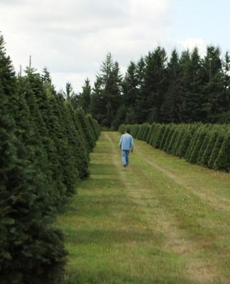 sprouffske tree farm
