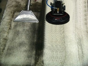 olympia carpet cleaning