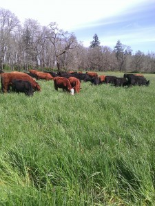 colvin ranch beef