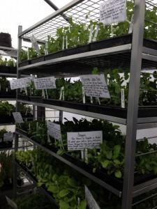 eastside urban farm garden starts