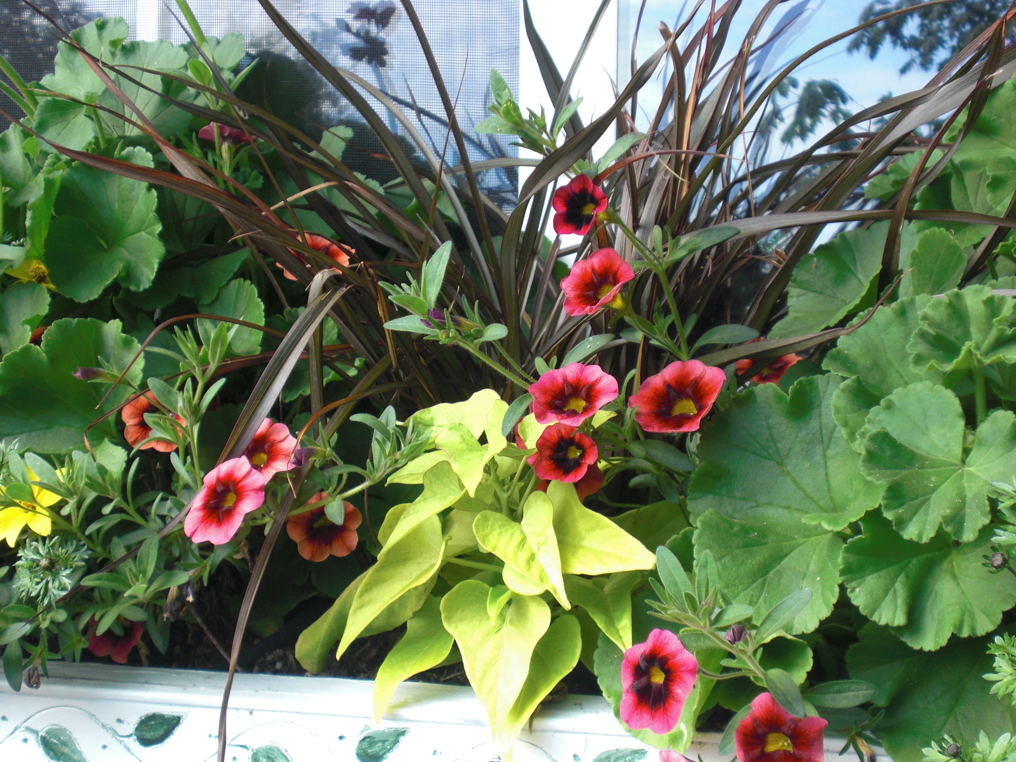 Ideas For Spring Planter Boxes And Pots Thurstontalk