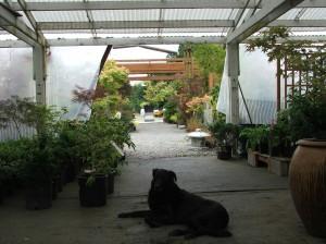 olympia gardening nursery