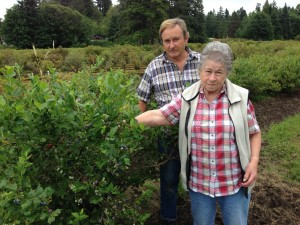 gile blueberry farm