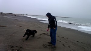 dog walk olympia