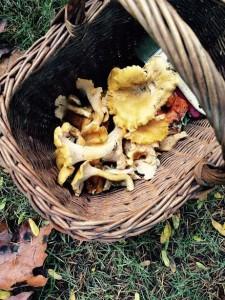 mushroom hunting kids