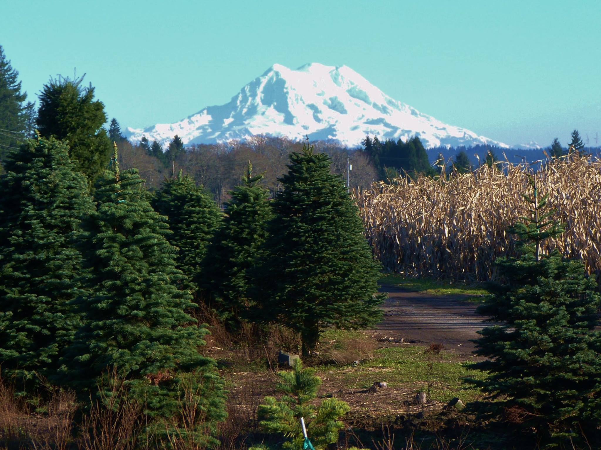 9 Christmas U-Cut Tree Farms - A Family Tradition Around ...