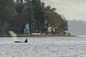 orcas olympia
