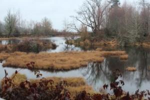 nisqually national wildlife refuge