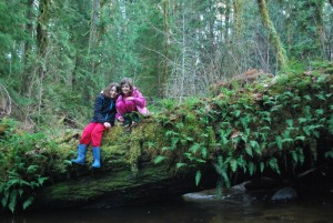 """The unique forests of the Pacific Northwest are lush and green, even in the winter, amazing guests from areas with """"real winter."""""""