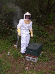 olympia beekeeper