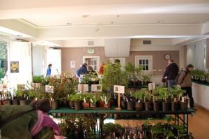native plant sales