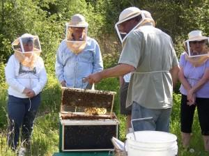 beekeeping olympia
