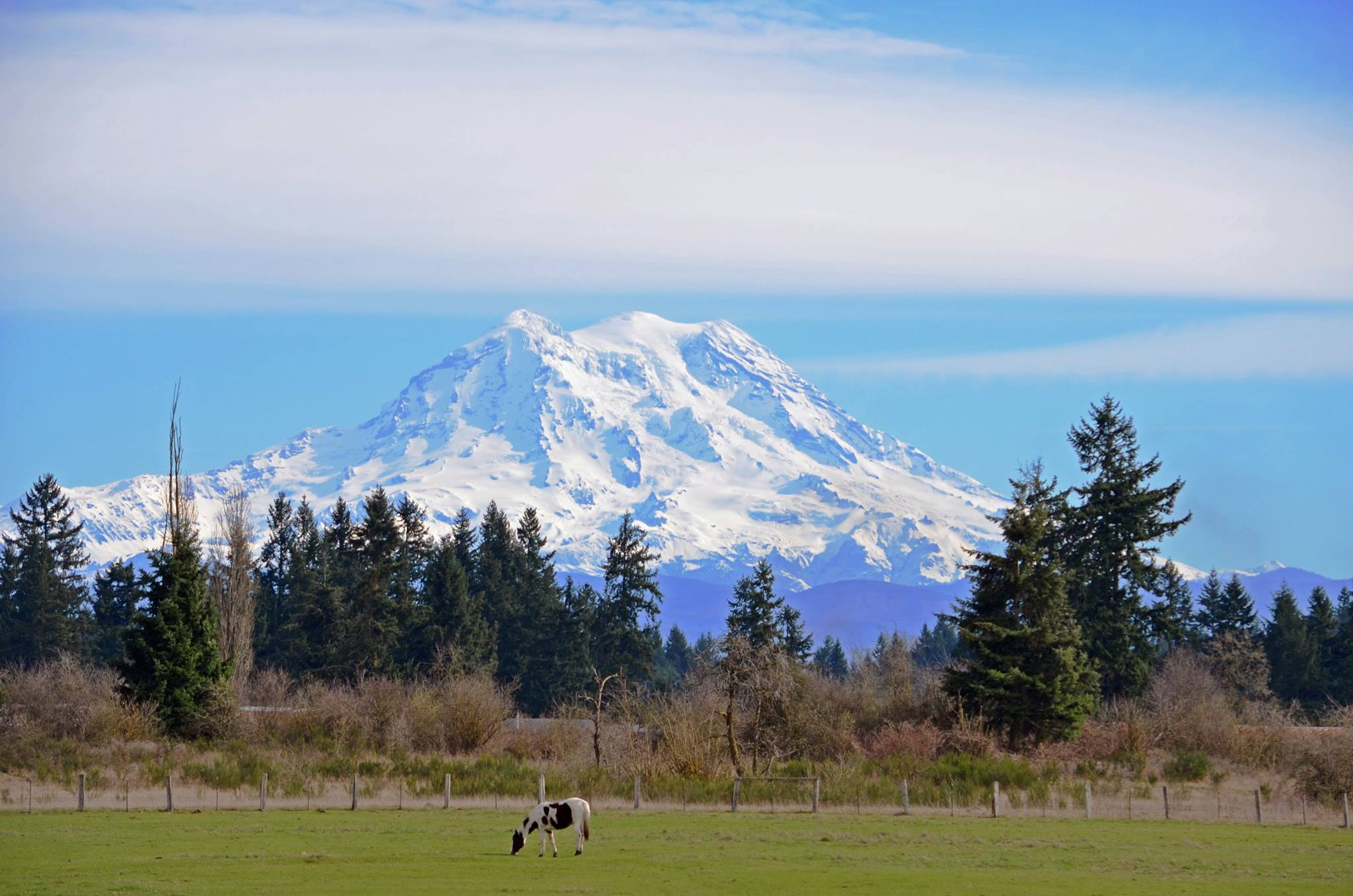 Mount Rainier as seen from Yelm on a sunny day in February.