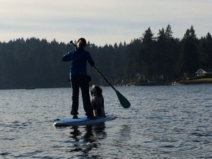 paddle board olympia