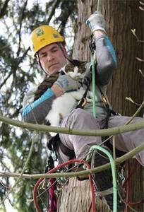 canopy cat rescue