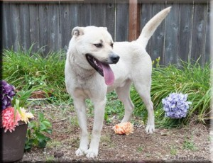 Hawk is the Adopt-A-Pet Dog of the Week.
