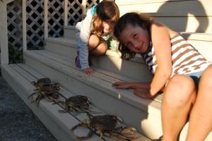 hood canal crab