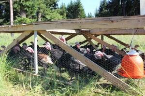 stokesberry farm