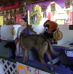 thurston county fair