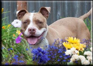 Frankie was helped by Adopt-A-Pet of Shelton to find a forever home.