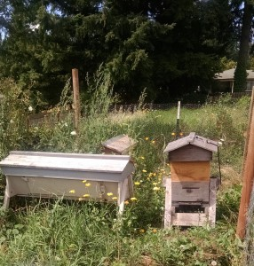 building bee hives