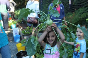 Franny wins the competition to harvest a kohlrabi.