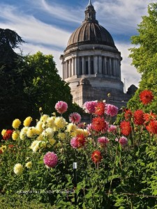 Summer is a busy time on the capitol campus. Photo credit: Diane Waiste.