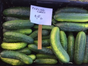 Pickling cucumbers were easy to find at local markets this summer with our hot weather.