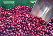 bloom creek cranberry
