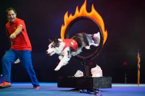 stunt dog olympia