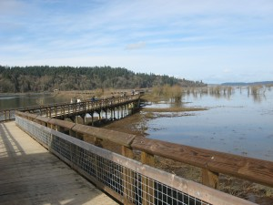 The Nisqually National Wildlife Refuge is a beautiful place for walking all the way out to the Sound.