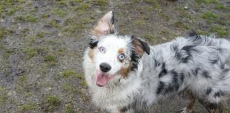 thurston county dog park