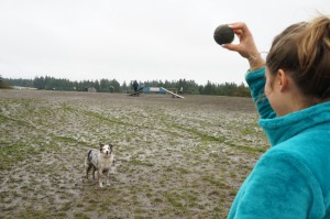 thurston county dog park